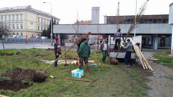V ulicích Prahy 7 přibylo více než 50 nových stromů