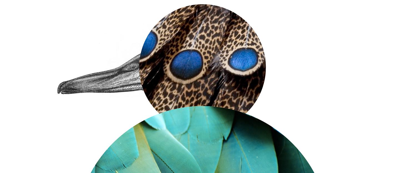 velké tvrdé ptáky obrázky těsné mladé dospívající sex