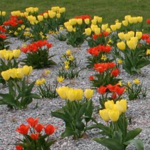 záhon jaro